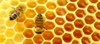 Bees be no more, less food than before