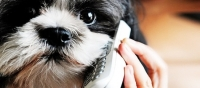 Development of human-animal communication