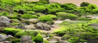 Thanks to algae Australia becomes biggest energy producer in the world